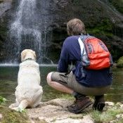 Nice blog with plenty of articles and destinations for pet friendly travel across the US