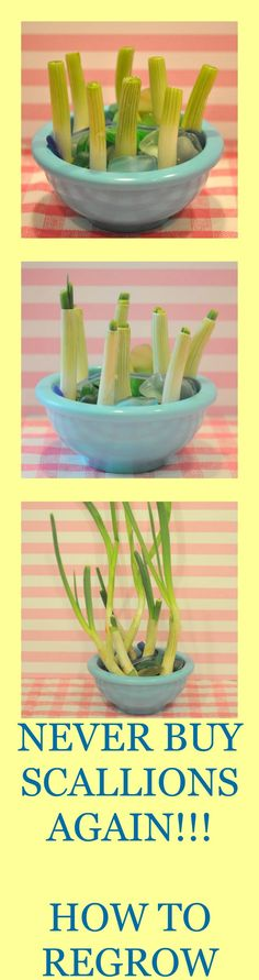 How to regrow green onions.  Just cut and put in water!  These pictures show just how fast the green onions will grow in just 1 week!!!