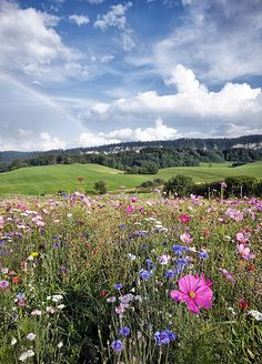 summer wild flowers in France