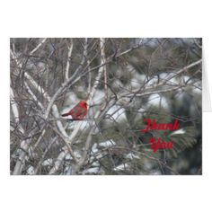 Winter Cardinal TY Card - winter gifts style special unique gift ideas