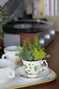 Mini-succulents in a vintage tea cup. Cacti And Succulents, Planting Succulents, Planting Flowers, Succulent Ideas, Teacup Plants, Cactus, Beautiful Mess, Landscaping Plants, Garden Inspiration