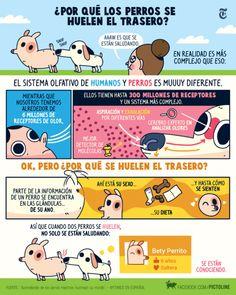 ¿Por qué los perros se huelen el ojete?@Pictoline.