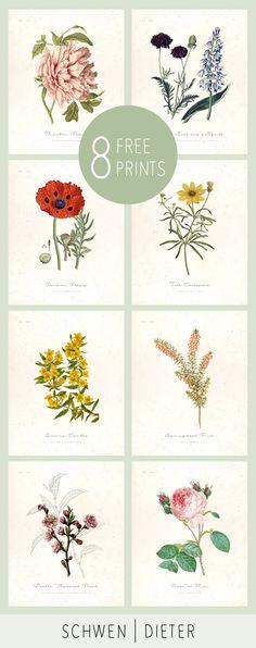 "8 Free Botanical Illustration Printables. 8""x10"" High resolution, floral art"