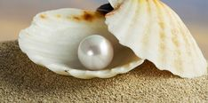 Image uploaded by La Bitch Pink ❀. Find images and videos about beach, sea and ocean on We Heart It - the app to get lost in what you love. Pearl Wallpaper, Snail, Sea Shells, Oyster Shells, We Heart It, Gemstones, Pictures, Animals, Amor