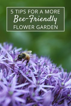 Your flower garden can play an important role in providing food for honeybees, bumblebees and native bees. Find out how to attract these pollinators and support their well-being.