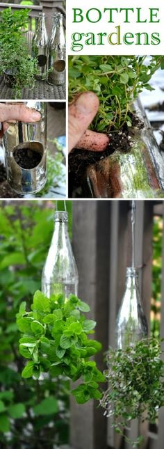 DIY : herb garden in bottles