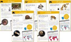 Le projet «documentaire animaliers» en ligne avec questionnaire de rallye-lecture continue de s'étoffer avec 5 nouveaux documentaires (hyène – cobra – gira…