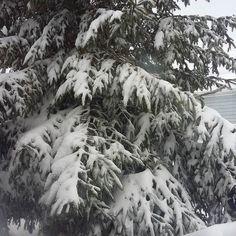 Está #tormenta de #nieve dejo a mi árbol cayéndose del peso #connyluna #marzo #Trabajando #encasa #mamalatina #bloggermom