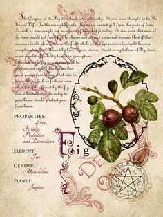 The Cackling Cauldron  Book of Shadows 4 page set 7