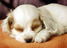¿Por qué los perros duermen tanto? Descubre los 3 motivos