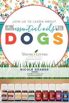 Learn how to use essential oils with dogs! Did you know there are even essential oil blends that are specifically designed for animals??