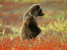 Un joven oso pardo entre las plantas