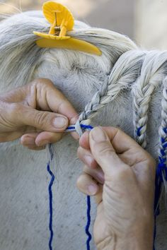 Horse Mane Braiding Step by Step