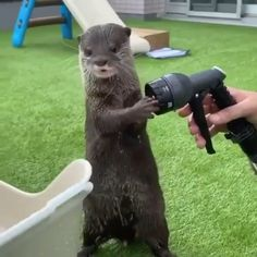 Cute Animal Videos, Cute Animal Pictures, Cute Little Animals, Cute Funny Animals, Otters Cute, Baby Otters, Tierischer Humor, Funny Animal Memes, Animals And Pets