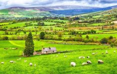 Ireland B&B Vacation with Airfare and Rental Car - Ireland: ✈ Ireland Trip w/Air from Great Value Vacations. Price/Person Based on Double Occupancy (Buy 1 Groupon/Person). Ireland Vacation, Ireland Travel, Ireland Bed And Breakfast, Chicago Ord, Kilkenny Castle, Moving To Ireland, Limerick City, Wild Atlantic Way, Thing 1