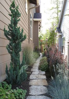 Stays less than 2 feet wide.Chamaecyparis l. 'Wissel's saguaro' (Wissel's saguaro false cypress); via Garden Adventures (Top 5 (or favorite conifers for small gardens) Landscape Borders, Landscape Design, Garden Design, Small Gardens, Outdoor Gardens, Columnar Trees, Narrow Garden, Evergreen Garden, Garden Shrubs