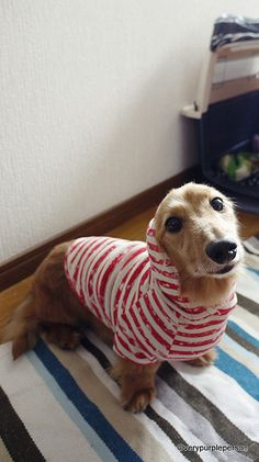 Dog clothes for sewing. MillaMilla free patterns.