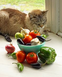 """Perhaps the silliest thing that is said about the cat is that it will, given the opportunity, choose a balanced and sensible diet.  It won't."" --William H A Carr"
