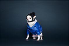 #Photograph #Animal #Dogs #Dog #Puppy #Cute #사진촬영 #동물 #반려견 #강아지옷 #강아지 #치와와