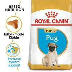 Pug Puppy 1,5kg Pug Breed, Puppy Breeds, Pet Online, Royal Canin Dog Food, Dachshund, Les Croquettes, Bone And Joint, Puppy Food, Pug Puppies