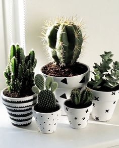 Lovely cacti in white ceramic pots which make the space more adorable. - - Lovely cacti in white ceramic pots which make the space more adorable. Living Room Plants, Room With Plants, Bedroom Plants, House Plants, Cactus Bedroom, Cactus Ceramic, Ceramic Pots, Cactus Planta, Cactus Y Suculentas