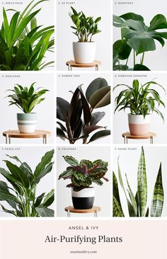 The best indoor plants that clean the air and remove toxins. Low maintenance, air-purifying plants for your home, bedroom, and office. Indoor Plants Clean Air, Air Cleaning Plants, Indoor Plants Low Light, Best Indoor Plants, Indoor Garden, Best Potted Plants, Best Indoor Trees, Ivy Plant Indoor, Hanging Air Plants
