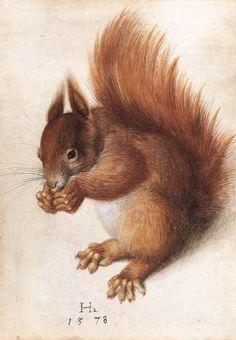 HOFFMANN, Hans  German painter (b. 1545/50, Nürnberg, d. 1591/92, Prague)    Squirrel  1578  Watercolour and gouache on parchment, 25,1 x 17,7cm  National Gallery of Art, Washington