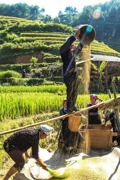 Mu Cang Chai #Vietnam