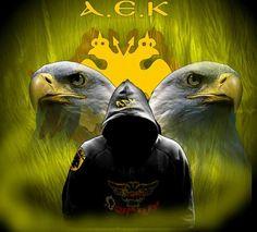 Fc Barcelona, Owl, Bird, Wall Art, Wallpaper, Sports, Animals, Wings, Liberty