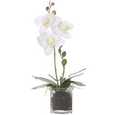 Emporium Phal-Square Glass Pot White | Spotlight Australia