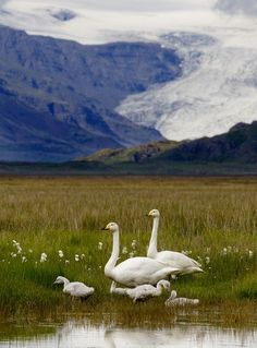 Family Photo by Ellert Gretarsson -- National Geographic Your Shot