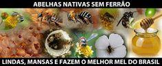 http://meliponariojandaira.blogspot.com/: GUIAS ILUSTRADO DAS ABELHAS NATIVAS SEM FERRÃO BRASILEIRAS