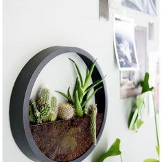 DIY Wall Clock Terrarium via @homeadore_decor
