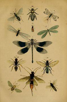 Handbuch der Naturgeschichte aller drei Reiche Stuttgart, 1850..- Biodiversity Heritage Library