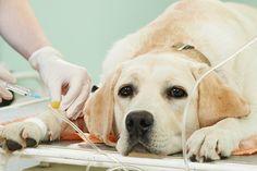 Los síntomas que pueden indicar un problema en la columna de su perro Su perro ha recibido tratamiento quiropráctico? Aullando de dolor después de un movimiento brusco cuando no hay otros síntomas están presentes – Patas delanteras débiles con ningún sitio del dolor – Sequedad de los ojos durante un …