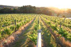 Lancemore Hill at Macedon Ranges in Country Victoria, Australia. Destination Wedding, Wedding Venues, Macedon Ranges, Victoria Australia, Vows, Acre, Countryside, Melbourne, Vineyard