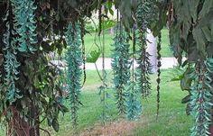 Flores de jade