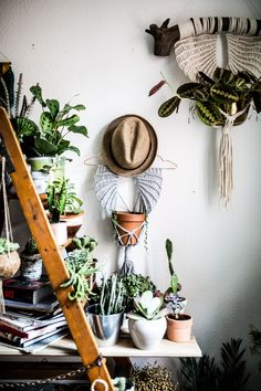 Cheap Home Decoration Stores Code: 8398405259 Pantone, Botanical Interior, Interior Design Courses Online, Turbulence Deco, Design Blog, Design Ideas, Dark Interiors, Interior Paint, Diy Painting