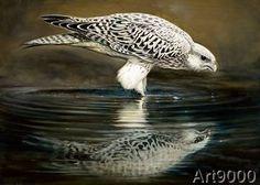 Renato Casaro - Drinking Falcon