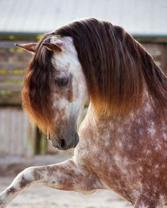 ❤If you Love Horses, You MUST Check The Link In Our BioExclusive Horse Related Products on Sale for a Limited Time Only! #equestrianlife #horselife