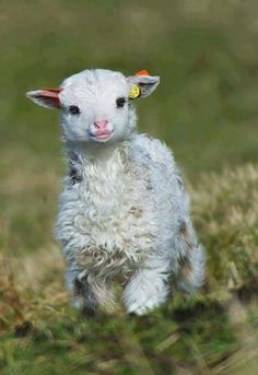 Baby sheep are such cute little animals [Prelude: They laugh at you, as it was already figured through your choice of partner, that self-esteem is low in this one. You are considered a weakling easy to control, a puppet- in hopes of gaining favor within anyone available.]