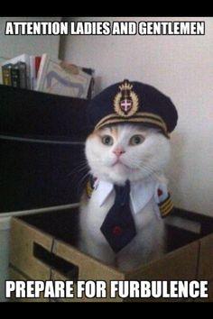 a cat..