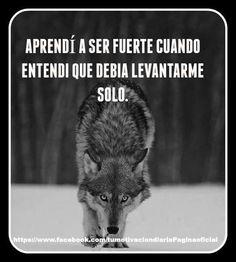 Siempre...!!!! Putas puñaladas traperas, hasta de quien te dice que te ama más que a su vida y más que a nada en este mundo, pues mejor sola que con una vida de mentiras y traidores Inspirational Phrases, Motivational Phrases, Converse Drawing, Wolf Quotes, Wolf Spirit, Lone Wolf, Spirit Guides, Strong Quotes, Spanish Quotes