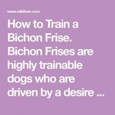 How to Train a Bichon Frise. Bichon Frises are highly trainable dogs who are driven by a desire to please their owners. However, for housebreaking especially, Bichons can be stubborn and difficult to train. A combination of consistency,... #teachdogtocome