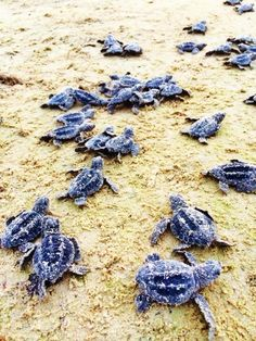 The Click Chicks » Blog Archive » Micaela Barrios South Padre Island Turtles Photography Want to be featured on The Click Chicks Blog?  Send 8 to 10 photos along with a few sentences to a couple of paragraphs describing your journey with photography. CONTACT ME: clickclickchicks@gmail.com