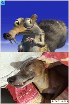 This is why I need a greyhound. And his name will be Scrat. And his favourite toy will me an acorn-shaped squeaky.
