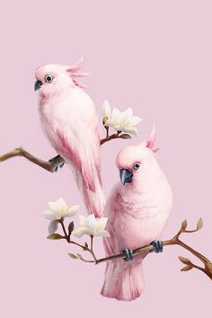 Diamond Painting Kits Beautiful Special Pink Bird Parrots on the Branches Parrot Wallpaper, Tier Wallpaper, Animal Wallpaper, Photo Wallpaper, Seagrass Wallpaper, Emoji Wallpaper, Paintable Wallpaper, Tropical Wallpaper, Wallpaper Pictures
