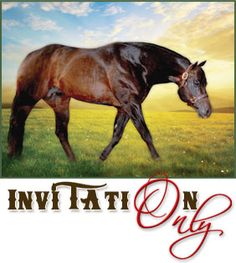 Amazing stallion.  AQHA - Invitation Only
