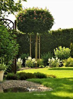 Lecę w kulki...: Jak przycinać hortensje bukietowe ? Deck Enclosures, Garden Plants, Arch, Outdoor Structures, Garden Ideas, Fotografia, Longbow, Arches, Landscaping Ideas