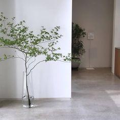 House Plants Decor, Plant Decor, Money Tree Plant Care, Colorful Flowers, Beautiful Flowers, Le Vent Se Leve, Moon Cafe, Japanese Plants, Branch Decor